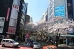 桜丘町.jpg